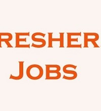 Jobs for Freshers